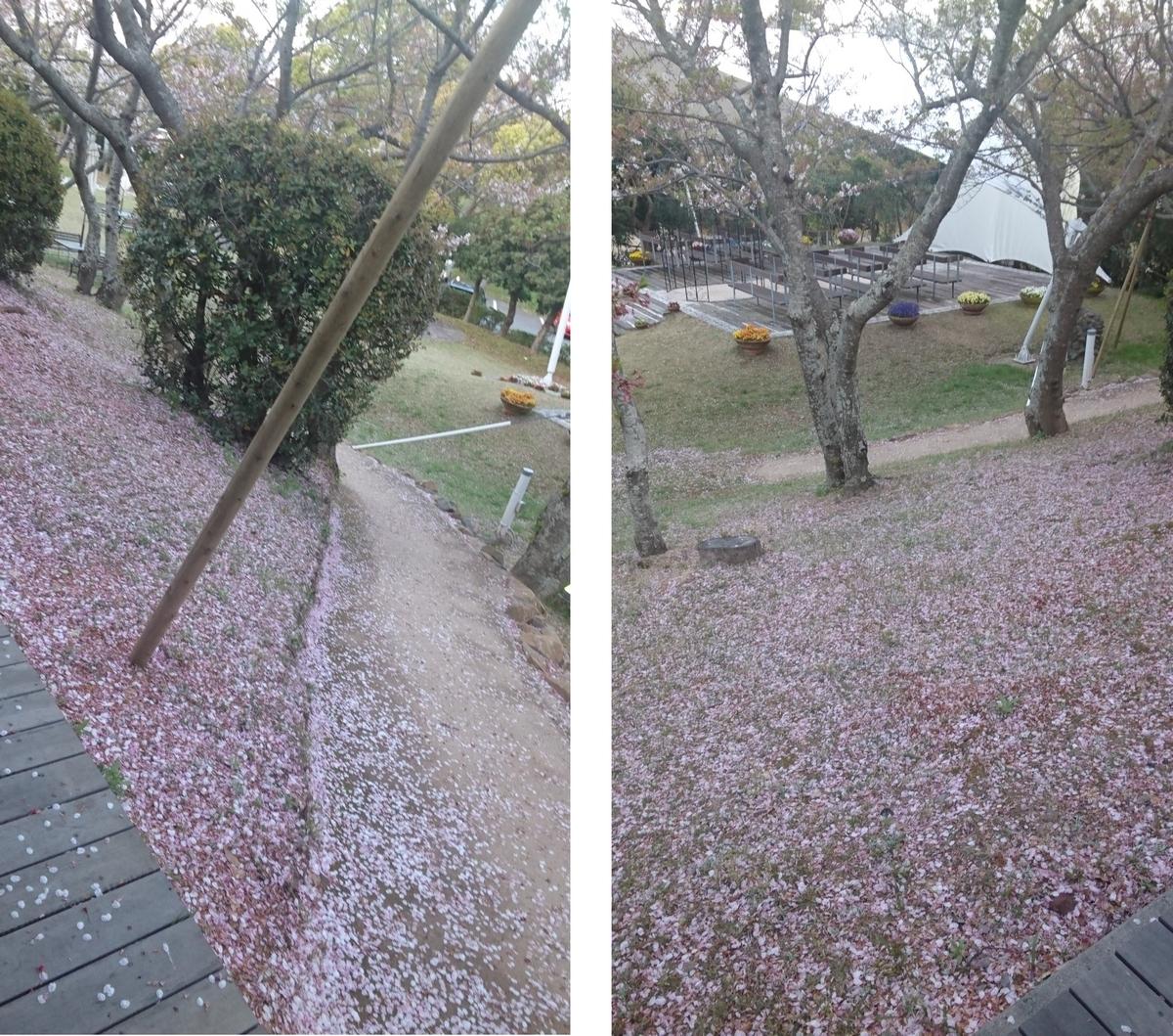 桜 木02
