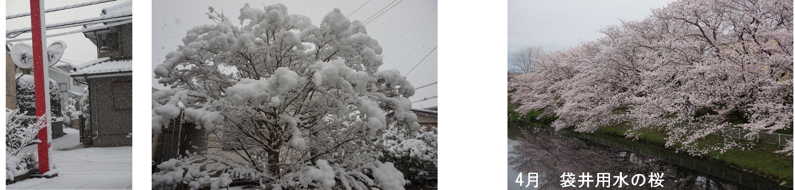 花吹雪01